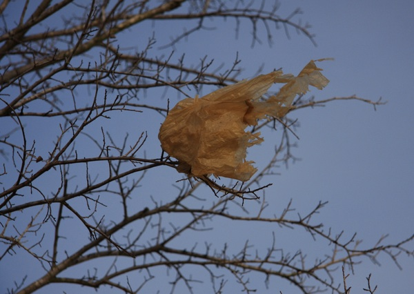 plastic-bag-trash-tree_creative-commons-alex